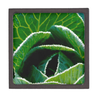 Cabbage one of your five a day premium trinket box