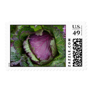 Cabbage Postage