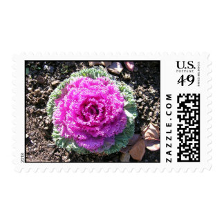 Cabbage Postage Stamps