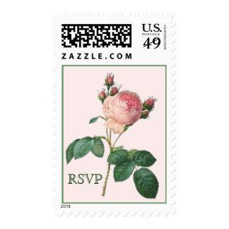 Cabbage Rose Botanical Print RSVP Postage Stamp