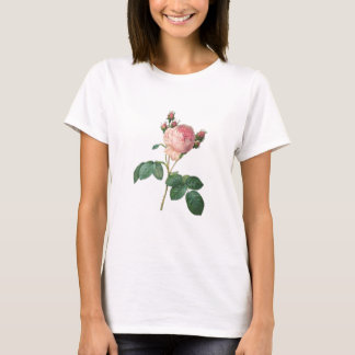 Cabbage Rose Botanical Single Stem Floral T-Shirt