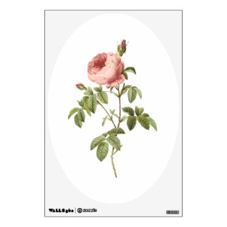 cabbage rose by Redouté Wall Sticker
