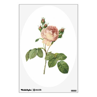 cabbage rose (Rosa centifolia) by Redouté Wall Decal