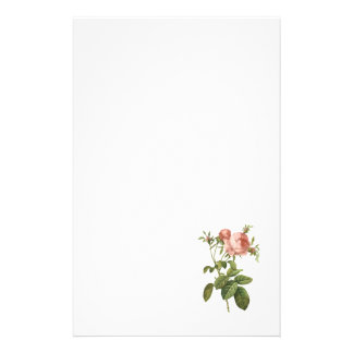 cabbage rose (Rosa centifolia foliacea) by Redouté Stationery Paper