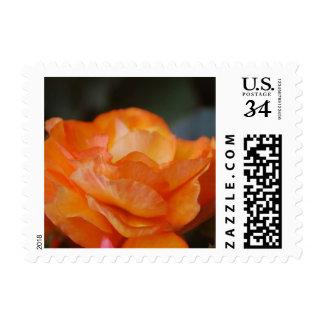Cabbage rose stamp