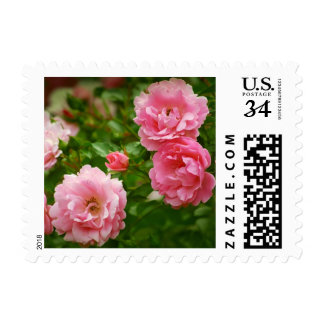Cabbage roses stamp