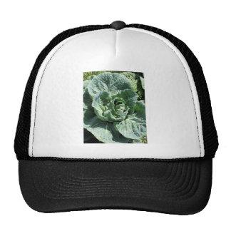 Cabbage Trucker Hat