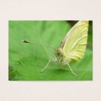 Cabbage White ~ ATC Business Card