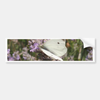 Cabbage White Butterfly Bumper Sticker