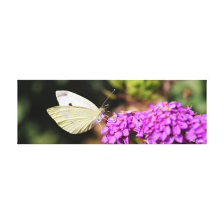 Cabbage White Butterfly Canvas Stretched Canvas Prints