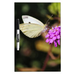 Cabbage White Butterfly Dry Erase Whiteboard