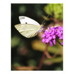 Cabbage White Butterfly Letterhead