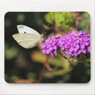 Cabbage White Butterfly Mouse Pad