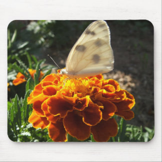 Cabbage white butterfly on a marigold mouse pad
