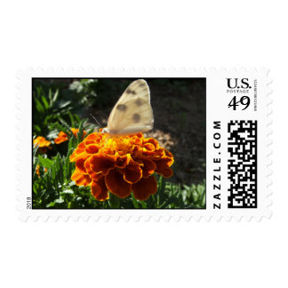 Cabbage white butterfly on a marigold postage stamp