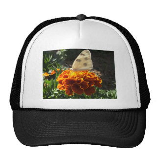 Cabbage white butterfly on a marigold trucker hat