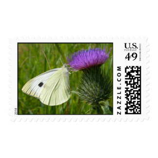 Cabbage White Butterfly Postage