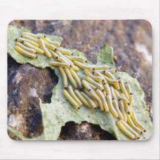 Cabbage White Caterpillars Mouse Mat