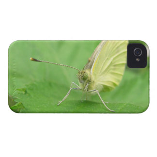 Cabbage White ~ iPhone 4 CaseMate Barely There iPhone 4 Cover