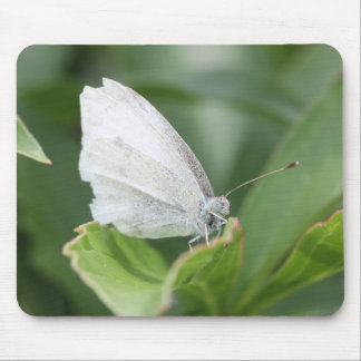 Cabbage White Mouse Pad