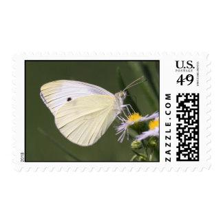 Cabbage White Stamp