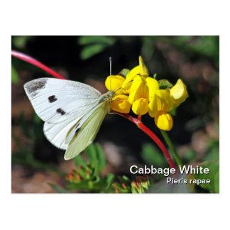 Cabbage White Postcard