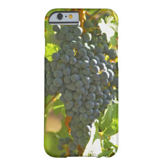 Cabernet Sauvignon grape bunch in the Chateau Barely There iPhone 6 Case