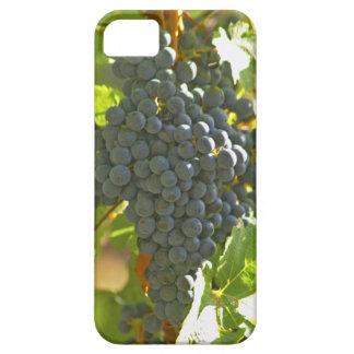 Cabernet Sauvignon grape bunch in the Chateau iPhone SE/5/5s Case