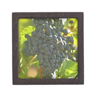 Cabernet Sauvignon grape bunch in the Chateau Keepsake Box