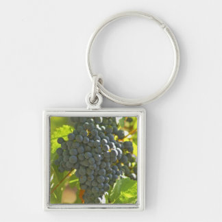 Cabernet Sauvignon grape bunch in the Chateau Keychain