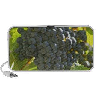 Cabernet Sauvignon grape bunch in the Chateau Mp3 Speakers