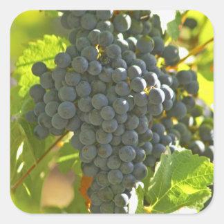 Cabernet Sauvignon grape bunch in the Chateau Square Sticker