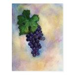 Cabernet Sauvignon Red Wine Grapes Postcard
