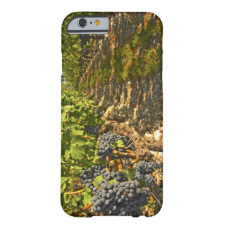 Cabernet Sauvignon vines in a row in the Barely There iPhone 6 Case