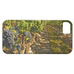 Cabernet Sauvignon vines in a row in the iPhone 5 Cases