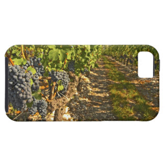 Cabernet Sauvignon vines in a row in the iPhone SE/5/5s Case