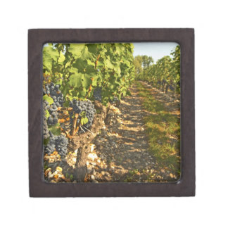 Cabernet Sauvignon vines in a row in the Keepsake Box