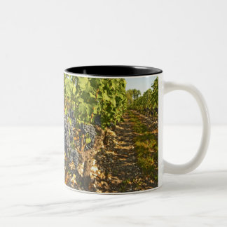Cabernet Sauvignon vines in a row in the Two-Tone Coffee Mug