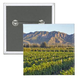 Cabernet Sauvignon vines in Huailai Rongchen 2 2 Inch Square Button
