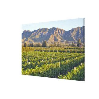 Cabernet Sauvignon vines in Huailai Rongchen 2 Canvas Print