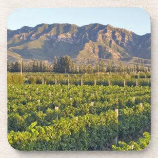 Cabernet Sauvignon vines in Huailai Rongchen 2 Drink Coaster