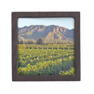 Cabernet Sauvignon vines in Huailai Rongchen 2 Gift Box