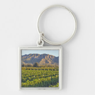Cabernet Sauvignon vines in Huailai Rongchen 2 Keychain