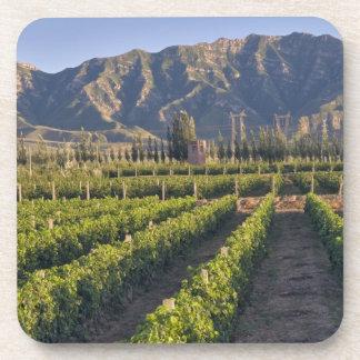 Cabernet Sauvignon vines in Huailai Rongchen Beverage Coaster