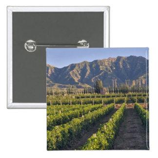 Cabernet Sauvignon vines in Huailai Rongchen 2 Inch Square Button