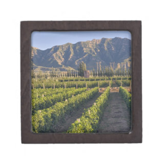 Cabernet Sauvignon vines in Huailai Rongchen Keepsake Box