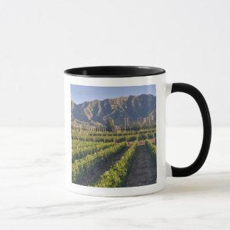 Cabernet Sauvignon vines in Huailai Rongchen Mug