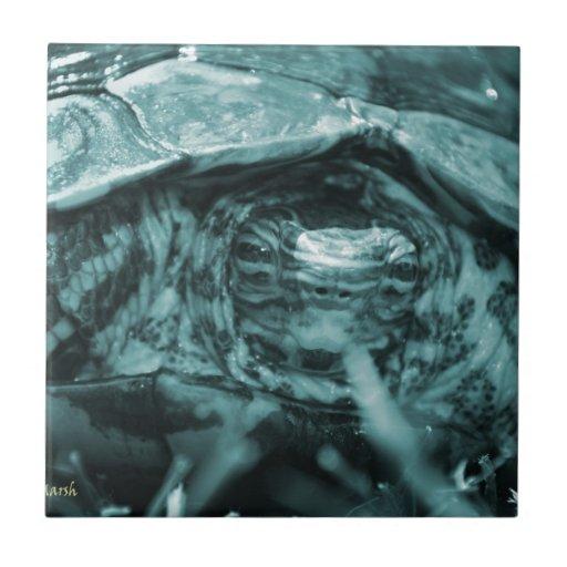 Cabeza adornada de la tortuga de madera encendido  teja cerámica