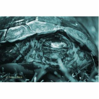 Cabeza adornada de la tortuga de madera encendido  esculturas fotográficas