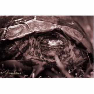 Cabeza adornada de la tortuga de madera encendido  escultura fotografica